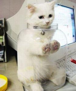 cats-stuck-0