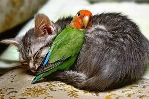 cat_parrot