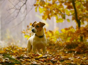 dog_in_the_woods_by_svitakovaeva-d4ecywm